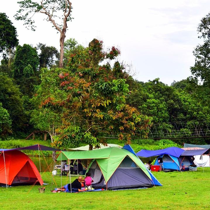 考艾森林公园内野营是怎样的一种体验?