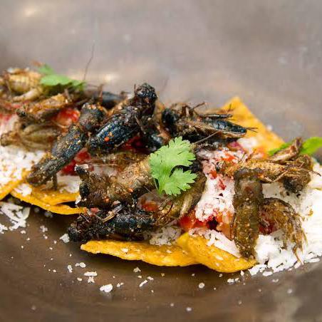"""敢来挑战吗?Insects in the Backyard餐厅竟做如此""""黑暗""""的料理"""