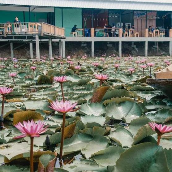 泰国最古老的城市佛统府,一听名字就想去打卡的景点!