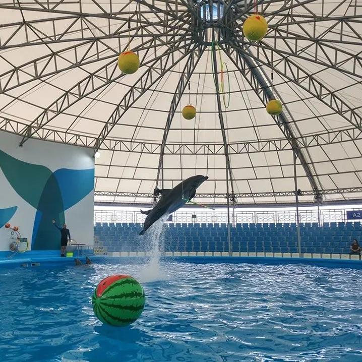 芭提雅Pattaya Dolphinarium和海豚约个约会,欢乐亲子游等你来