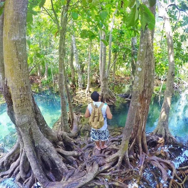 7个森林里的水上乐...